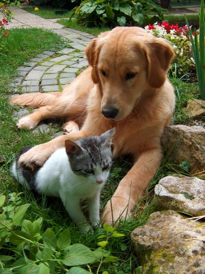 dog and cat in a garden