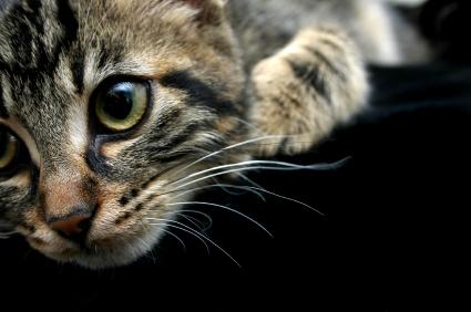 Kittens Look