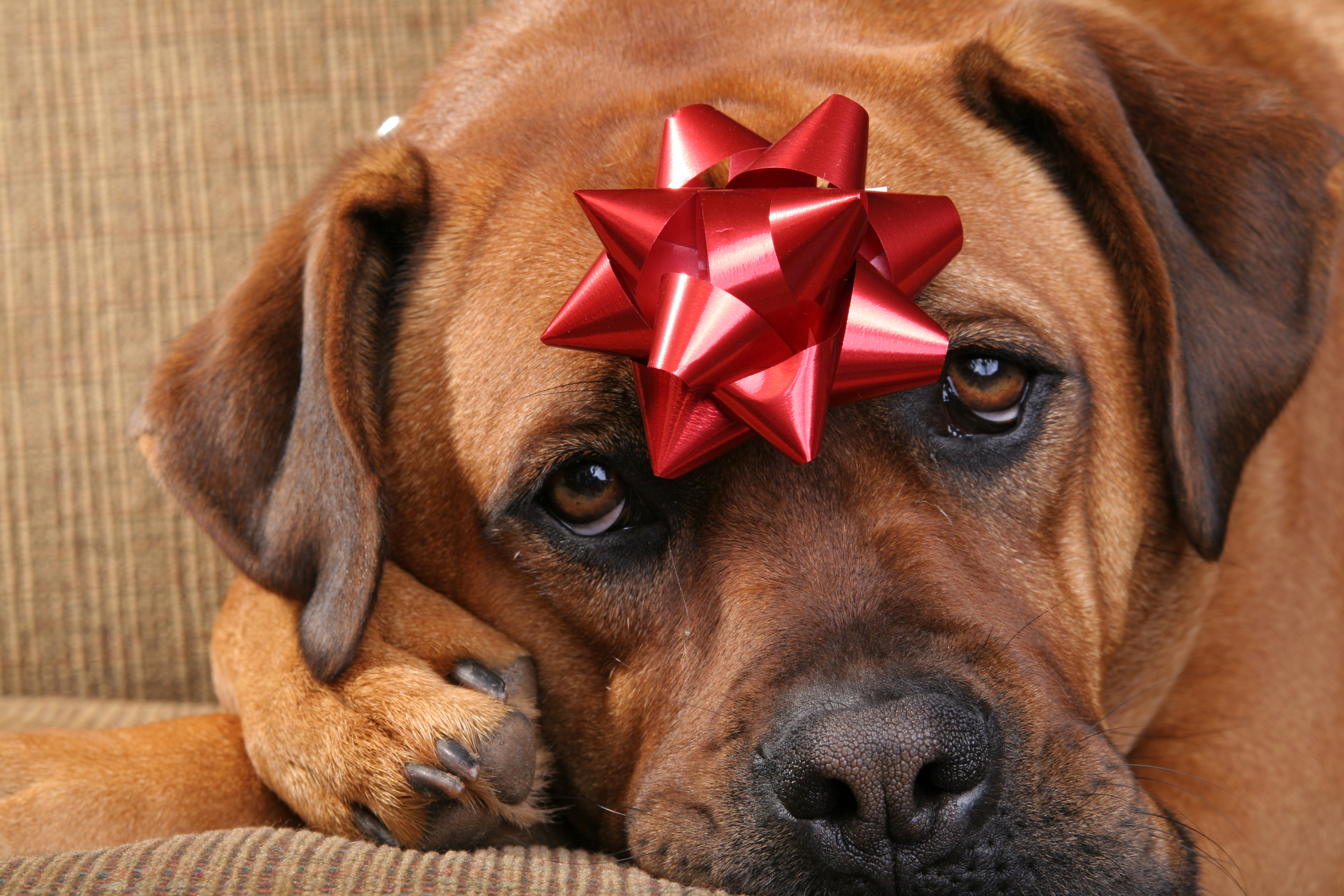 December Holiday Decoration DON\'Ts – What Every Pet Parent Should ...