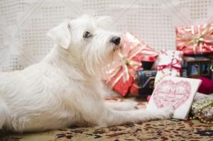 Christmas Shnauzer