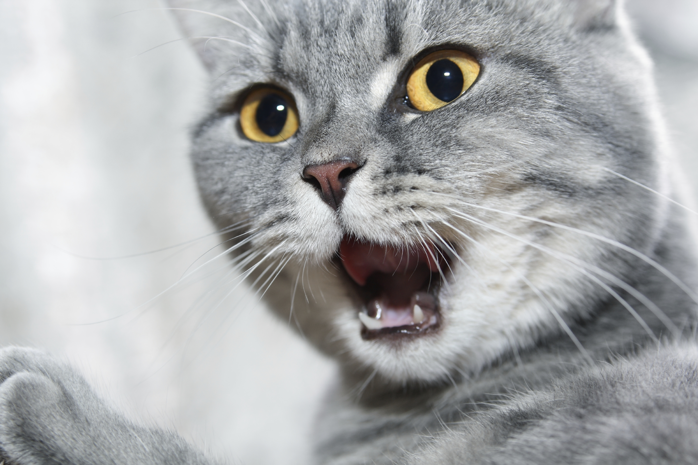 Resolving Cat Conflicts In The Home New Study Results
