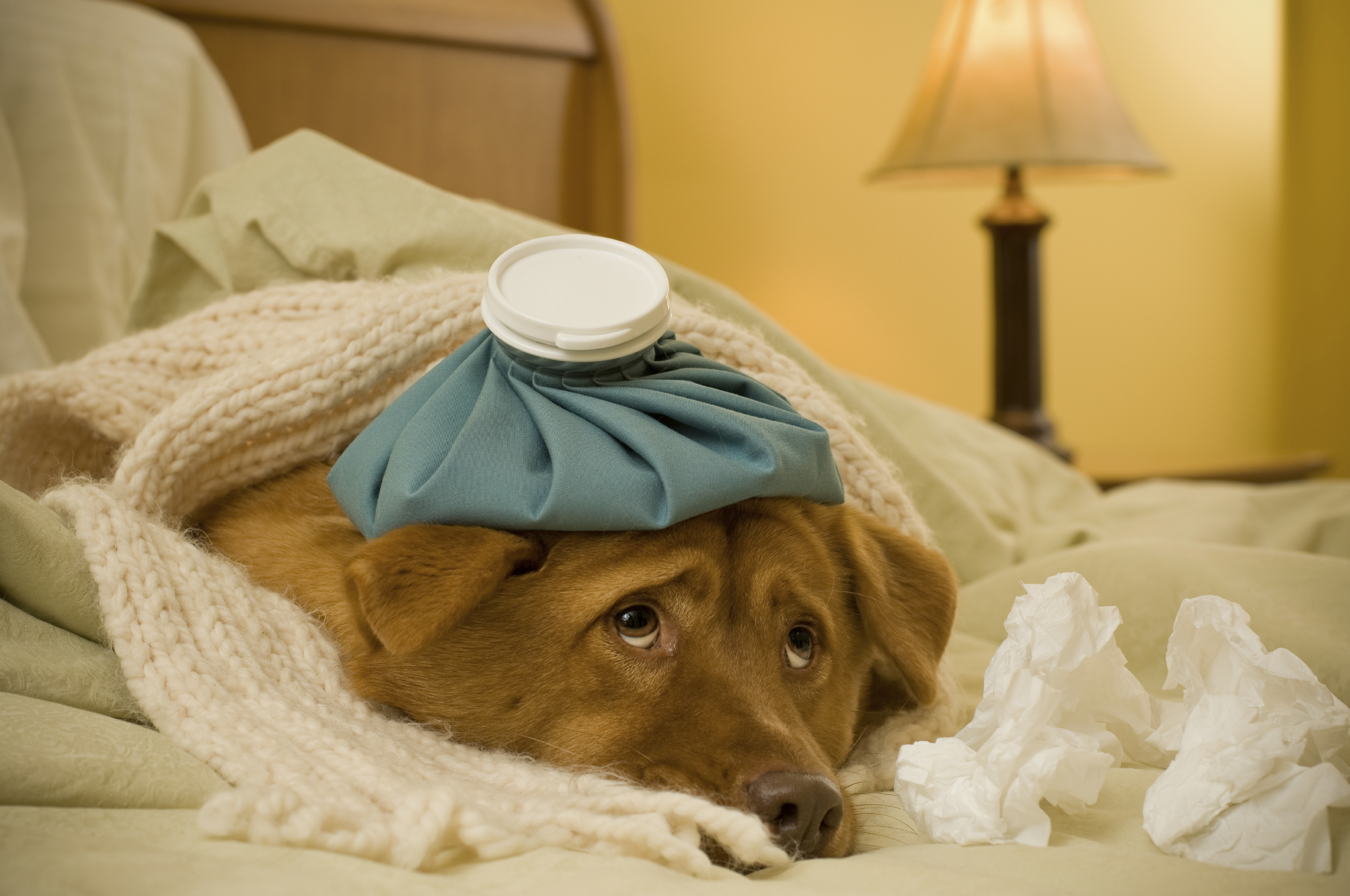Veterinarians Report Outbreak Of Highly Contagious Dog Flu