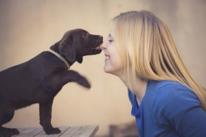 sweet brown labrador puppy licking the nose of a blond teenager girl
