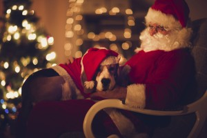 The Gift That Keeps On Giving Pet Friendly Donations