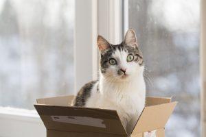 cat in the postal box