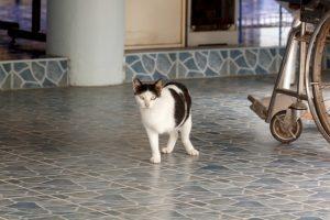 cat three legged