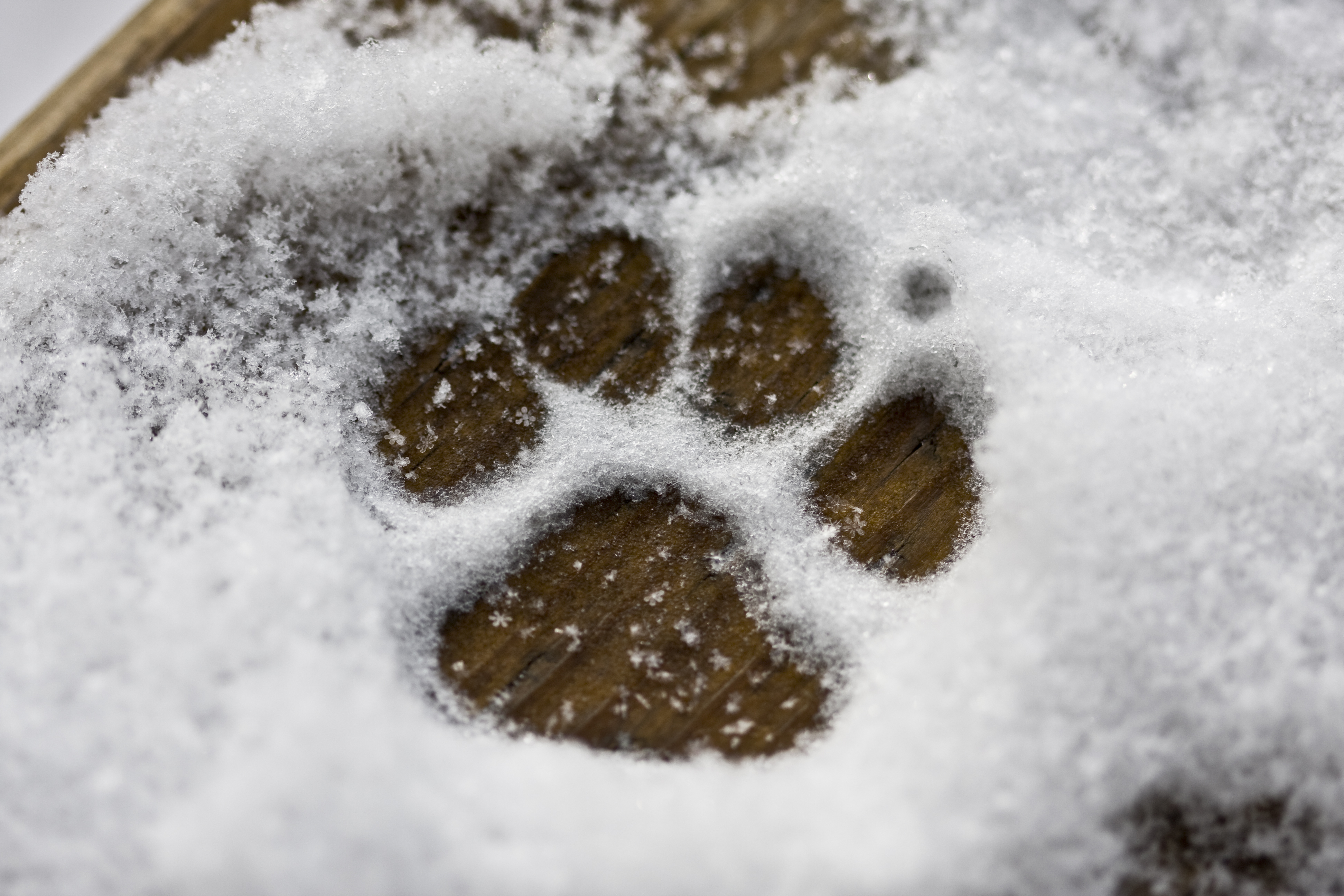 Image result for paws in winter