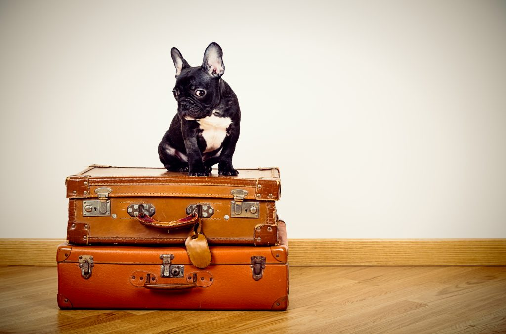 Your Guide To Pet Friendly Travel Planning Sites And