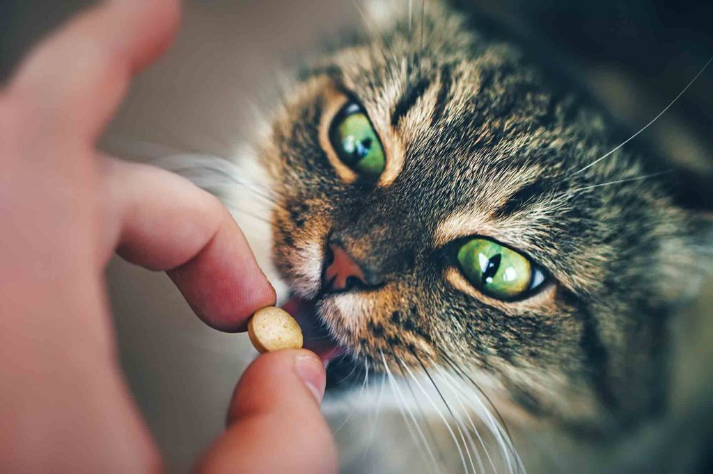 DIY Natural Pet Pill Pockets that Help
