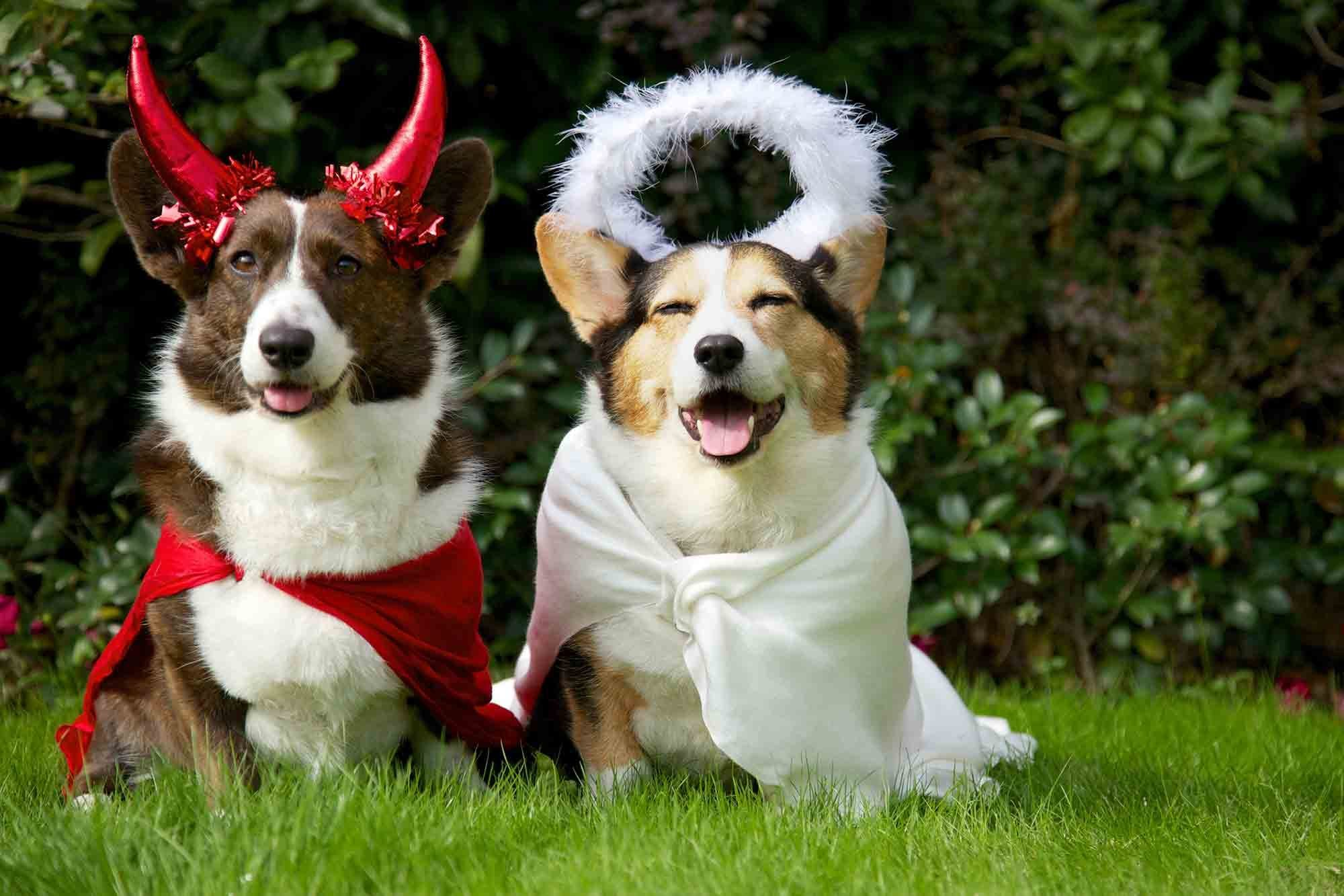 easy pet costume ideas