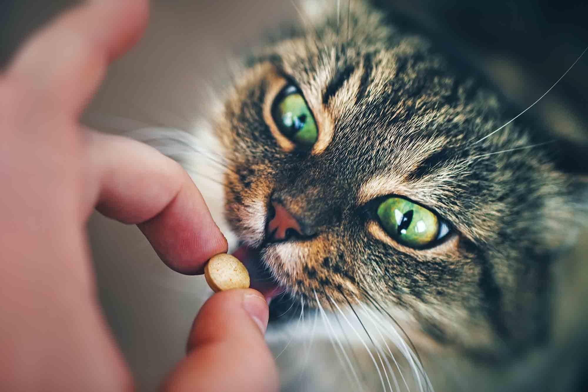 antibiotics in pets