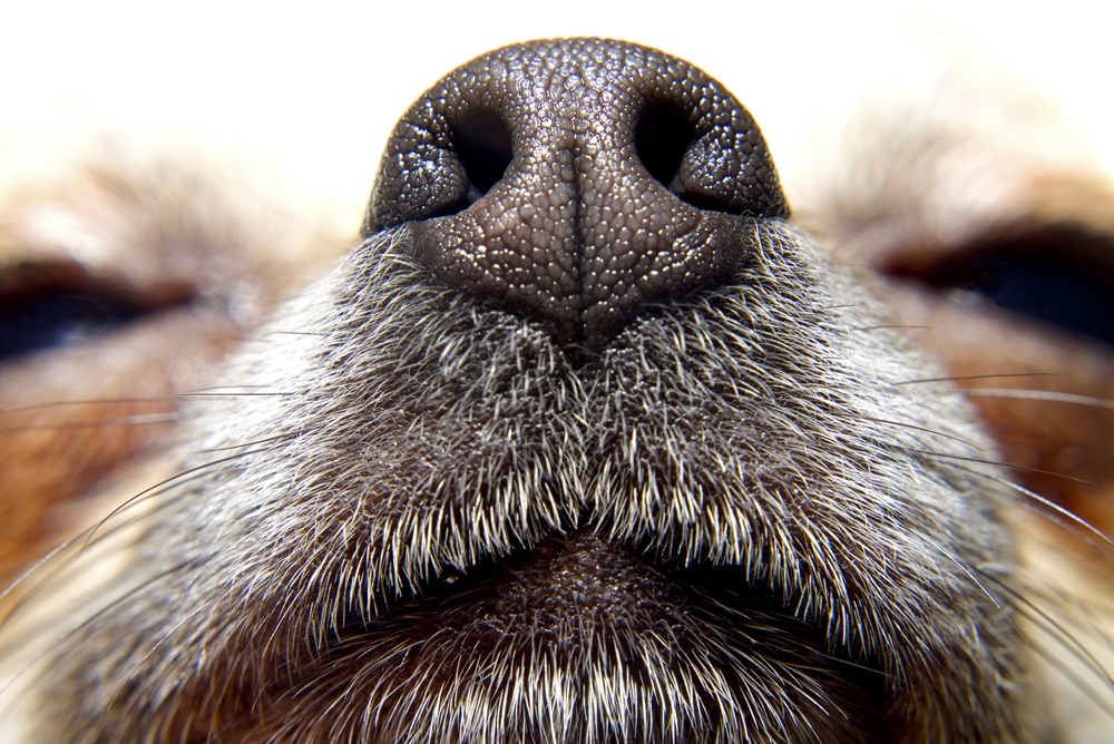 power of a dogs nose
