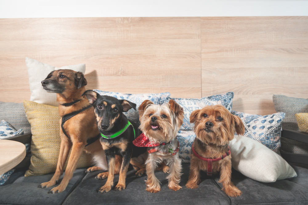 Four dogs of various breeds