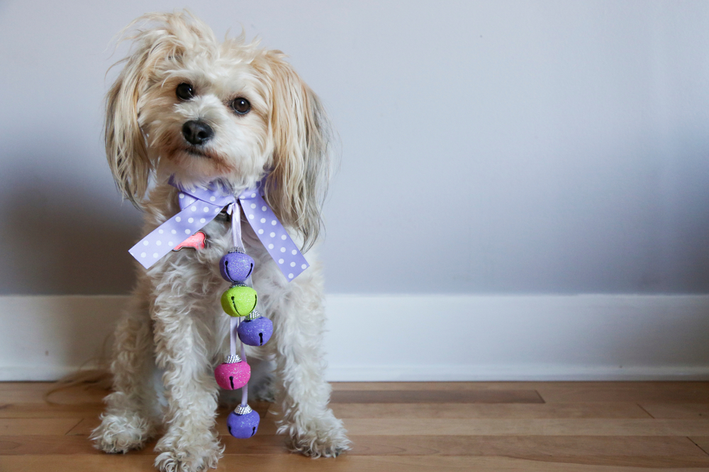 Easter costumes for pets