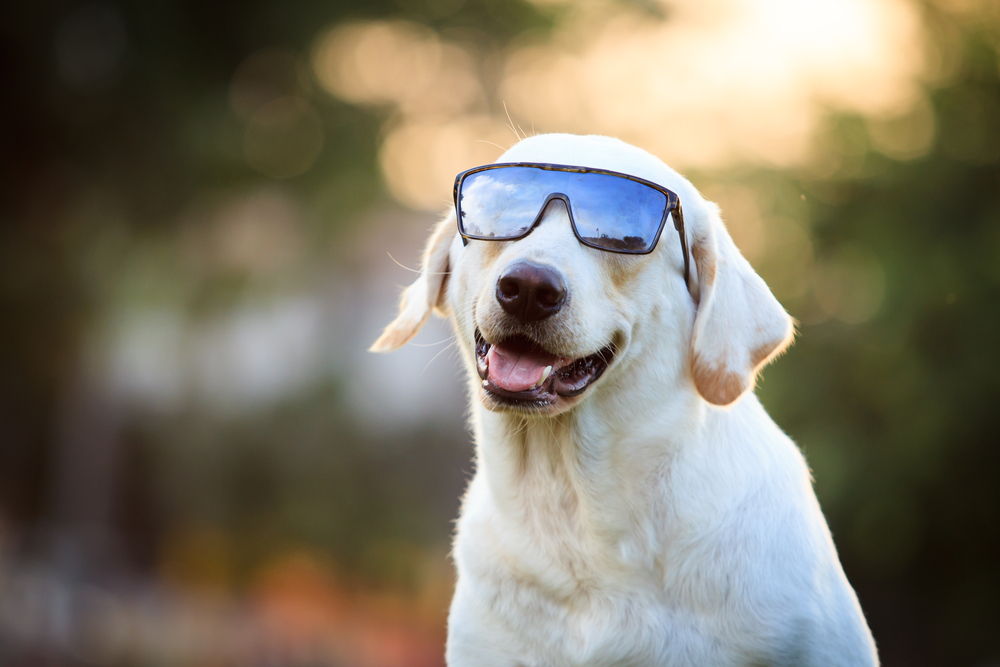 pet skin cancer