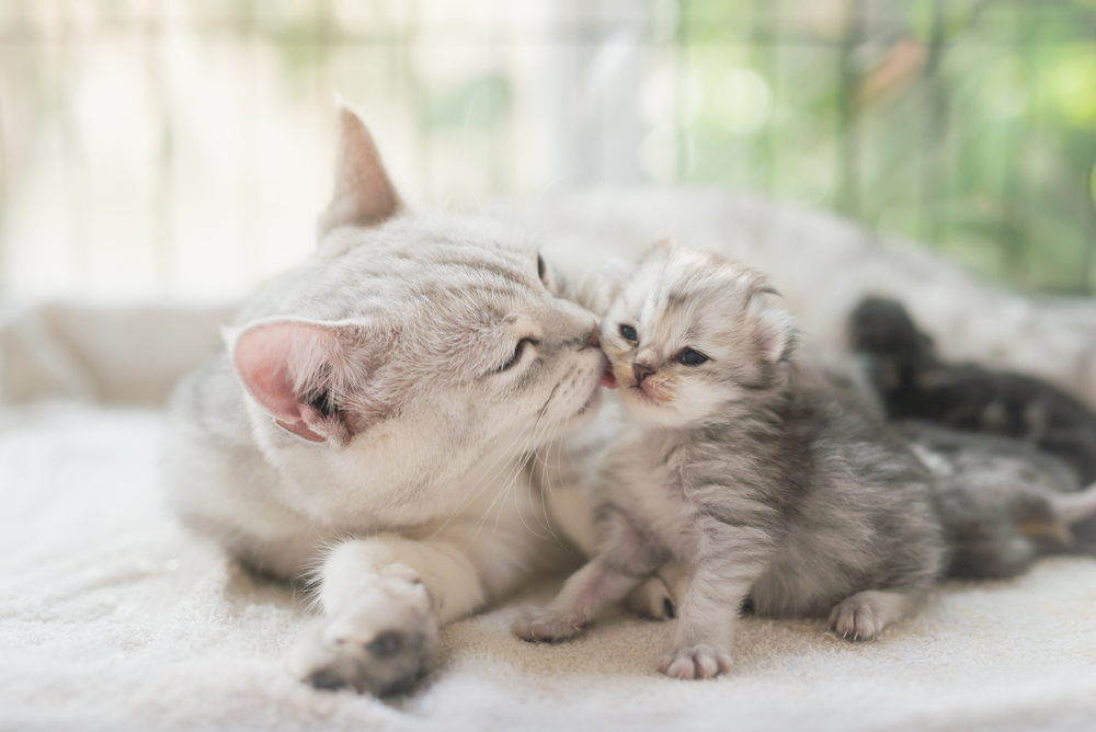 The Lifespan Of Cats Oakland Veterinary Referral Services