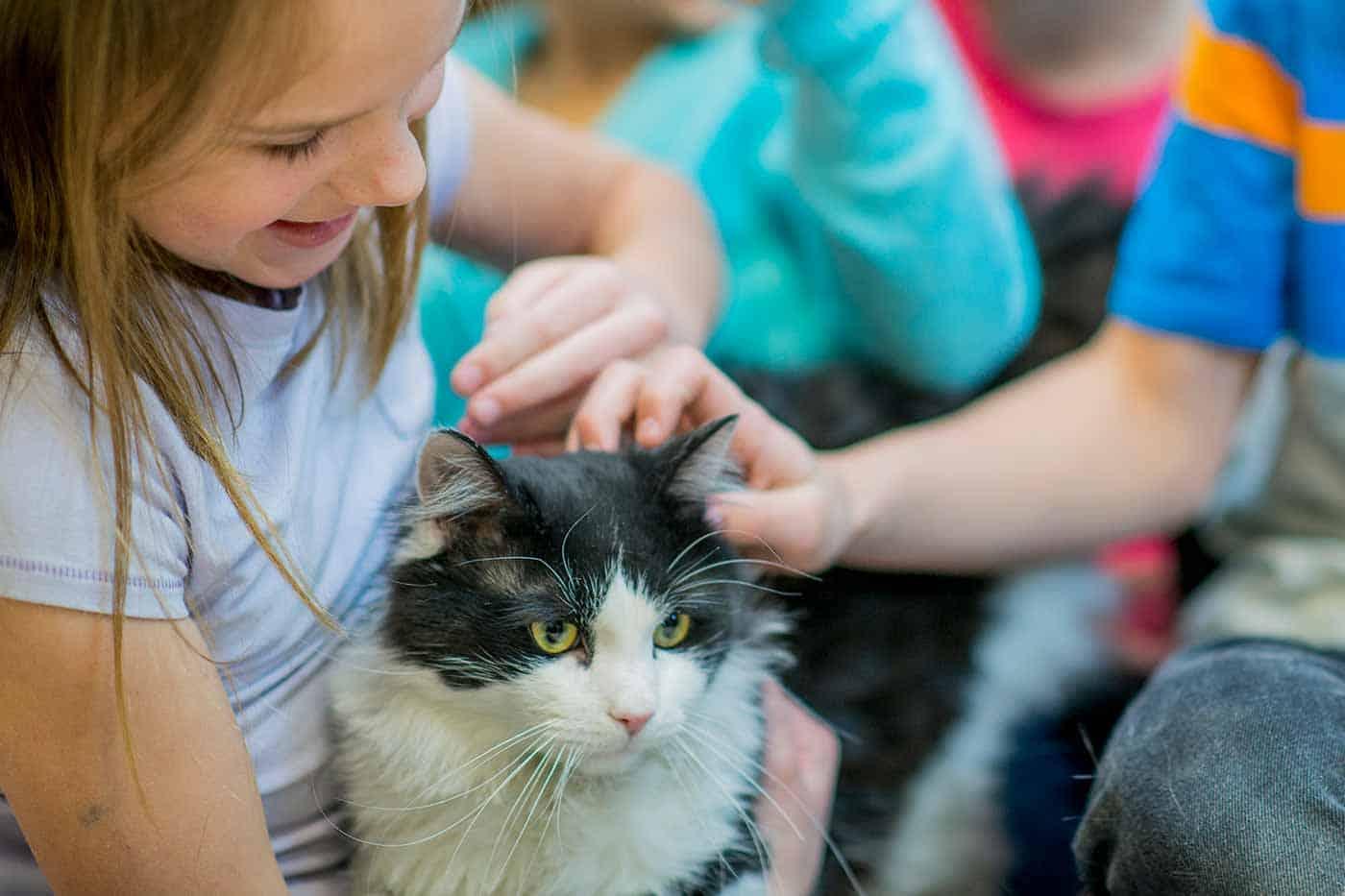 Pet Allergy | Pet Dermatology | OVRS in Southeastern Michigan