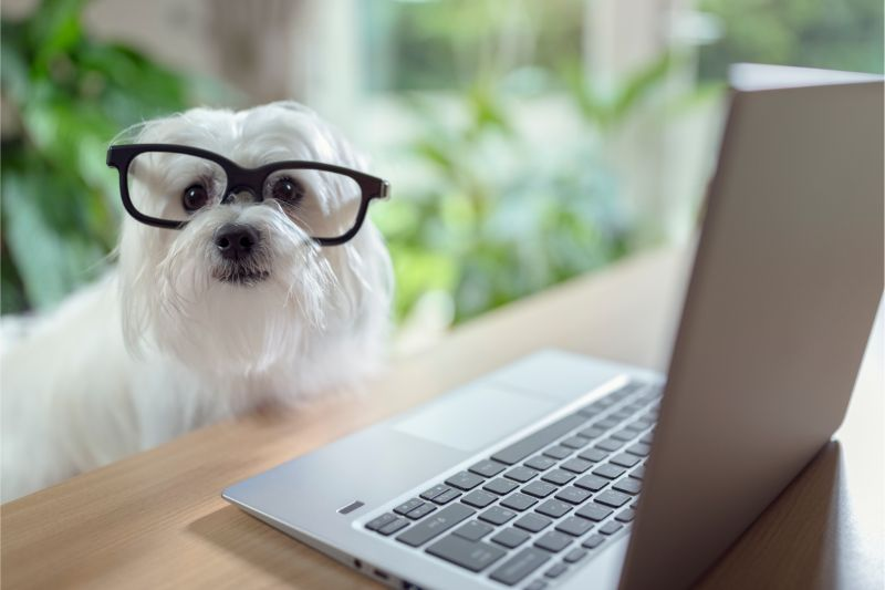 dog researching